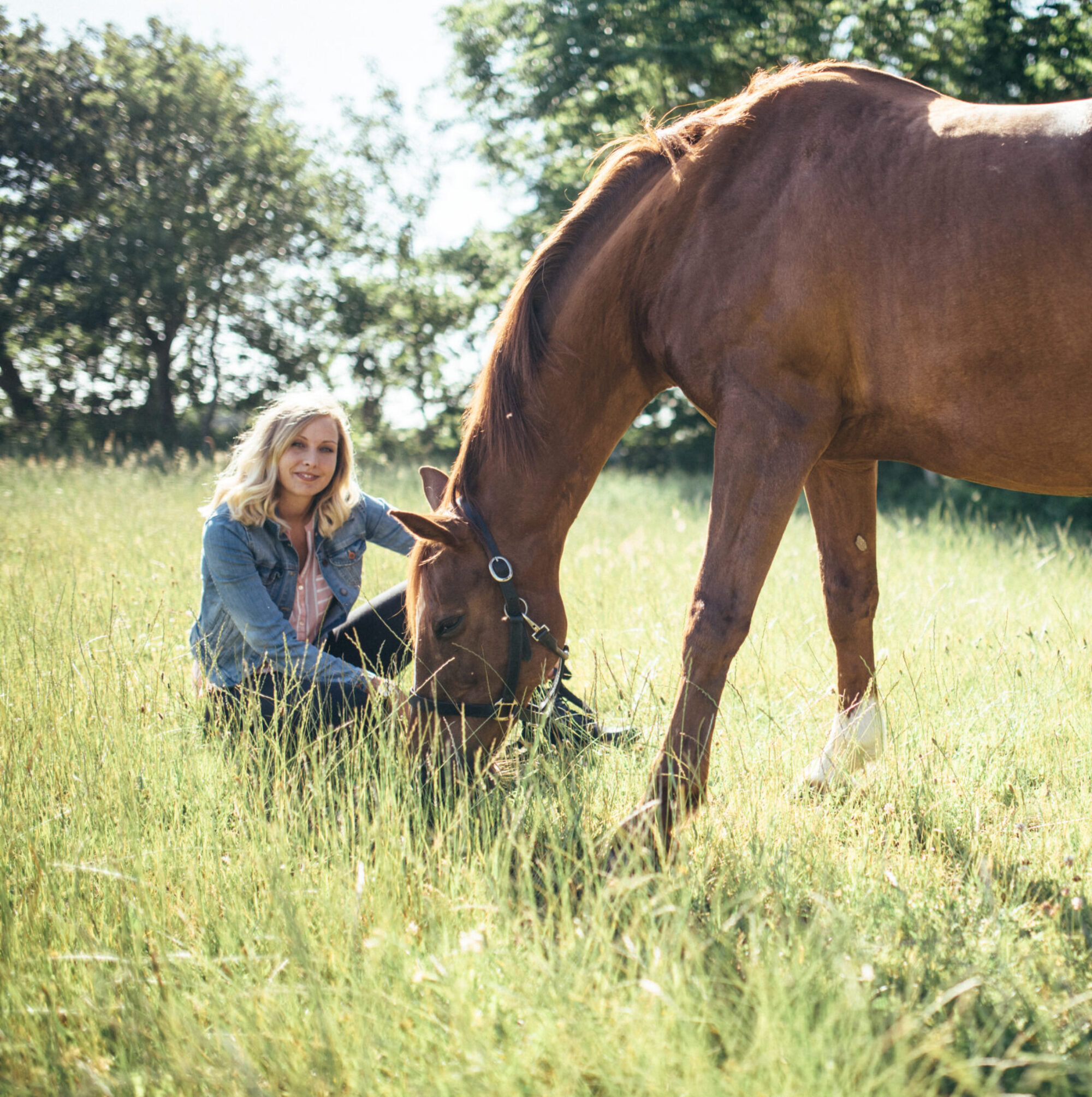 Unabhängige Pferdeernährungsberatung